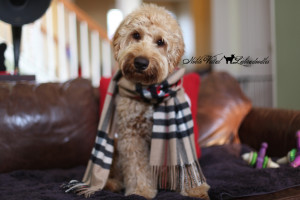 Barksdale's Burberry's House Check