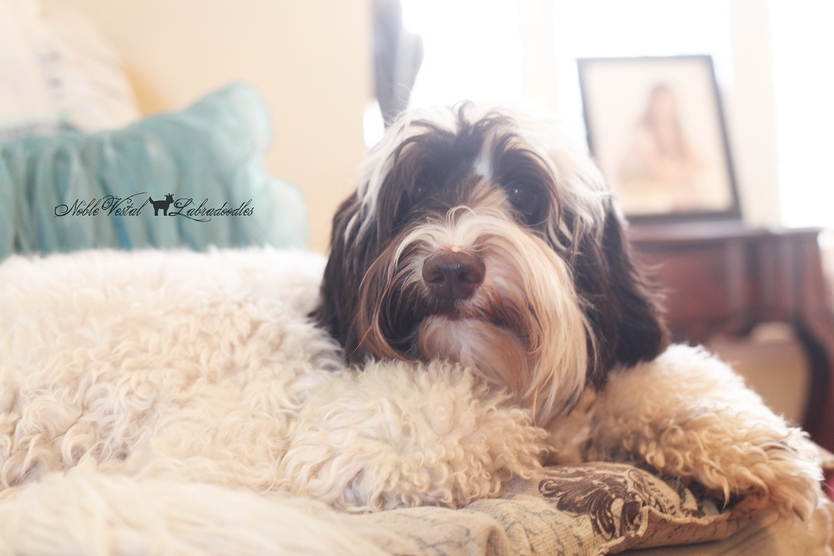 how to stop my dogs fur from shedding