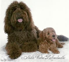 coco and cody 1